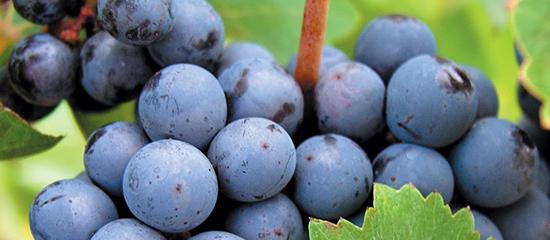 Calendario de celebraciones del vino 2016